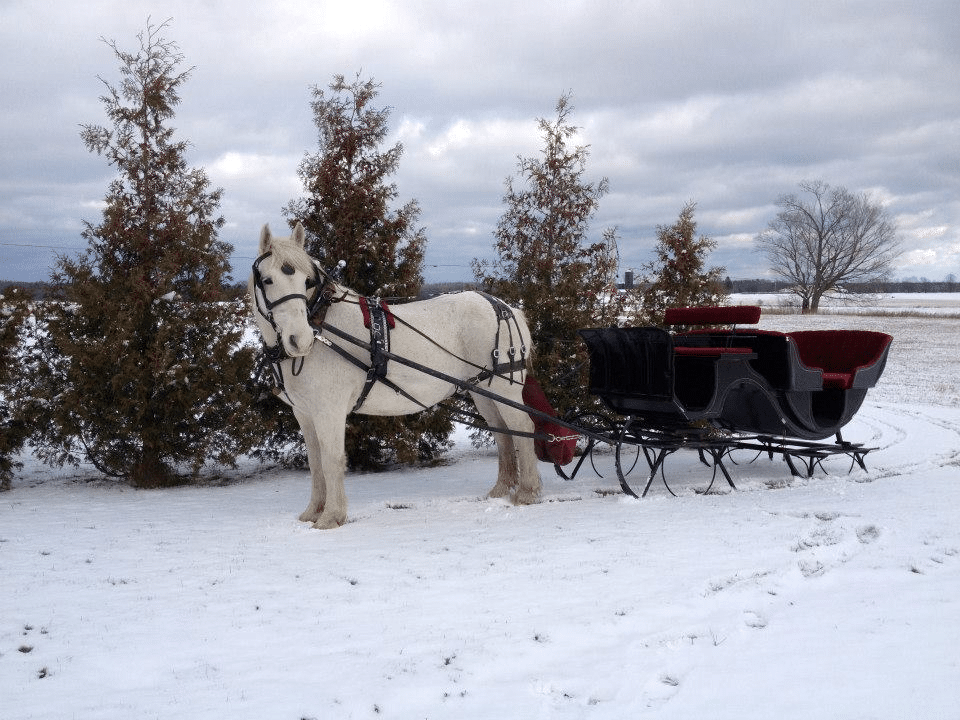 Mayberry Carriage - Door County winter scene